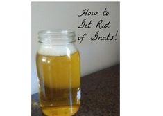 Cheap way to get rid of gnats naturally!