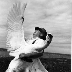 Abbotsbury, la swannerie de la Reine | 1961 |¤ Robert Doisneau | 9 août 2015 | Atelier Robert Doisneau | Site officiel