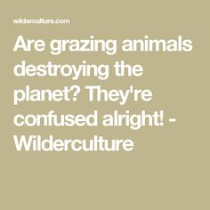 Are grazing animals destroying the planet? They're confused alright! - Wilderculture