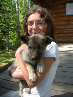 Warning:  playing with a sled dog puppy will make you fall in love.  Iditarod Trail Race Headquarters - Wasilla, Alaska