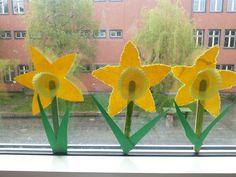 Märzenbecher wachsen am Fenster