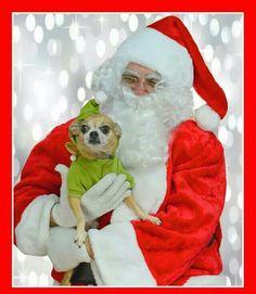 Santa Paws and Chi