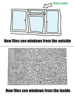 How flies see windows.