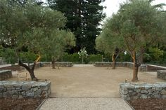 Spacious Backyard Design Backyard Landscaping Shades of Green Landscape Architecture Sausalito, CA
