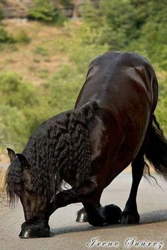 A bowing Horse :)
