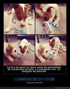 Este perrito lo sabe bien... vivir es compartir