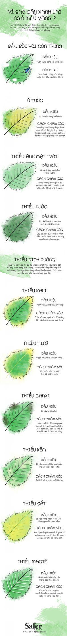 [Infographic] vi sao cay xanh nga mau vang.