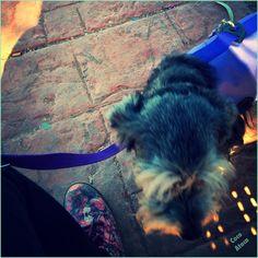Coco ataca! De paseo por el parque con la diseñadora