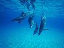 Major Victory: Illegal Dolphinarium Ordered To Shut Down And Free The Captive Dolphins