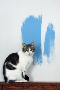 Portrait in Blue & White | Flickr: Intercambio de fotos