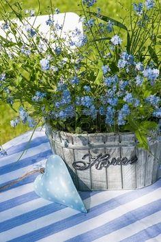 Potted Forget Me Nots