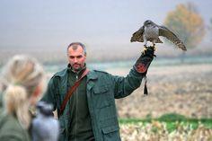 Czech-Falconry-Birds-Hunting-Bohemian-Photo-99