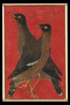 Two myna birds (front)   © Ashmolean Museum, University of Oxford