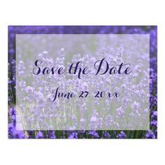 Personalized Purple Lavender Save The Dates Postcard
