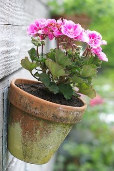 Hanging potted pink flowers