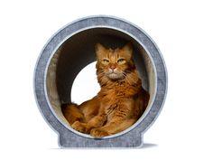 Kratzmöbel Le Rond - nachhaltiges Design für Katzen