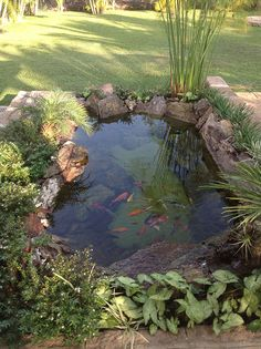 backyard pond ideas & pond in backyard + pond in backyard diy + pond in backyard landscaping + pond in backyard natural swimming pools + backyard pond + koi pond backyard + backyard pond ideas + koi fish pond backyard Garden Pond Design, Landscape Design, Fish Pond Gardens, Diy Pond, Pond Waterfall, Waterfall Design, Pond Water Features, Pond Landscaping, Water Garden