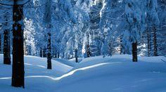Winter Wonderland #winterskin #snow #winterfun
