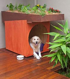 How to make a dog kennel with rooftop garden: This comfy dog dwelling has a rooftop garden, so you can grow colourful annuals, succulents or herbs while saving your back, as you don't have to bend ove(Niche Pour Dog Houses) Pet Kennels, Puppy Kennel, Cool Dog Houses, Rooftop Garden, Indoor Garden, Diy Stuffed Animals, Better Homes And Gardens, Large Dogs, Pets