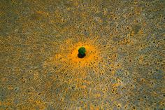 Tree of Life - Tsavo National Park, Kenya