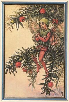 FLOWER FAIRIES/BOTANICALS: Yew; This is an original vintage Cicely Mary Barker Flower fairies colour print. It is not a modern reproduction, 1985; approximate size 13.0 x 9.0cm, 5.25 x 3.5 inches