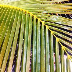 • palm patterns • http://ift.tt/18Cthcw