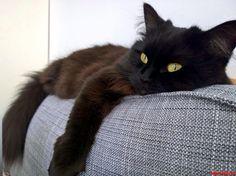 Lazy Caturday - http://cutecatshq.com/cats/lazy-caturday/