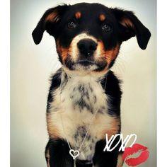 Diamonds and doggies... It's puppy love!! 💞🐕💕 #valentines #valentinesday #puppylove #puppy #puppies #ilovedogs #hearts #bordercollie #xoxo #kiss #puppiesofinstagram #dogsofinsta #diamonds #jewelry #gifts #giftsforher #need #cute