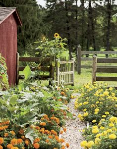 {Marigolds in the vegetable garden!} Marigolds serve as natural pest-deterrents in a vegetable garden. So pretty too! Farm Gardens, Outdoor Gardens, Veggie Gardens, Dream Garden, Home And Garden, Garden Gates, Fenced Garden, Garden Entrance, Le Far West