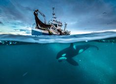 Oceans under greatest threat in history, warns Sir David Attenborough. Foto Audun Rikardsen
