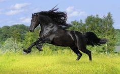 Disfruta las mejores fotografías de caballos.