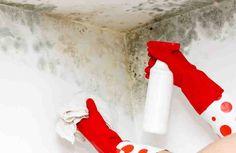 El moho en las paredes interiores no sólo es desagradable, sino también puede ser un peligro para la salud de tu familia. Además de la cantidad y de su ubicación, su presencia también sugiere un problema más grande en tu casa, la infiltración del agua.  En este tutoriar puedes ver como quitar manc