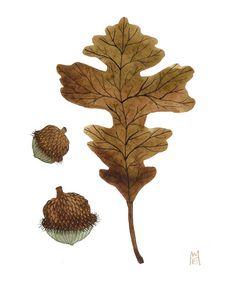 acorns and oak leaf.