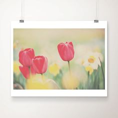 tulip photograph tulip flower photograph spring by oohprettyshiny