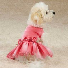"""dog dresses   ... Dog Dress a sensational style. X-small has 9"""" neck, 17"""" chest and 10"""