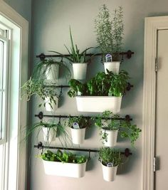 Indoor Plant Decor ideas are fun for people of all ages. You don't have to have a huge garden or your Indoor Plant Decor Ideas are perfect for small garden arrangements. There are many different plants that are suitable for… Continue Reading → Herb Garden In Kitchen, Diy Herb Garden, Kitchen Herbs, Herbs Garden, Wall Herb Garden Indoor, Herb Wall, Garden Types, Plants In Kitchen, Hanging Herb Gardens
