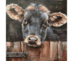 Kalf Clyde, acryl 40 x 40 cm (niet te koop) - Cow Paintings On Canvas, Farm Paintings, Animal Paintings, Canvas Art, Farmhouse Paintings, Cow Pictures, Farm Art, Cow Art, Farm Animals