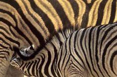 Patterns in Nature by Russ Burden