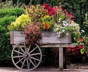 Flower Cart In Bloom Print by Rosanne Jordan Décoration Harry Potter, Tiny Garden Ideas, Garden Bed Layout, Garden Cart, Flower Cart, Decoration Christmas, Diy Décoration, Wheelbarrow, Raised Garden Beds