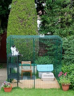 Outdoor Walk In Cat Run Enclosure by Omlet, http://www.amazon.co.uk/dp/B008AW0O4M/ref=cm_sw_r_pi_dp_9Bfitb0CZMAHH