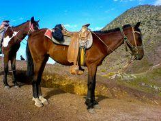 caballo, cafe, montura, caballos, montaña, cerro, pendiente, horse, brown, saddle, horse, mountain, hill, slope