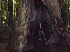 This Redwood survived at least one fire during its beautiful life. *RedwoodStrong*NorCal