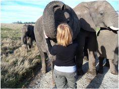 Meeting the Elephants