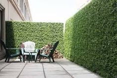 artificial hedging - Google Search