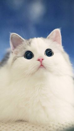 Those beautiful big eyes. kittens and puppies, baby kittens, kittens cutest, cats Cute Little Kittens, Cute Cats And Kittens, I Love Cats, Kittens Cutest, Baby Cats, Cute Funny Animals, Cute Baby Animals, Animals And Pets, Cute Dogs