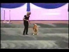 Awesome video of freestyle dancing with a dog