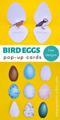 Sachunterricht Make pop-up bird egg cards, featuring a real-life egg and the bird who lays it! Egg Crafts, Bird Crafts, Animal Crafts, Creative Activities For Kids, Creative Kids, Craft Activities, Teaching Activities, Spring Crafts For Kids, Projects For Kids