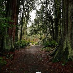 Back in the good ole Pacific Northwest for the holidays. Quite a big change from the sunny weather in Costa Rica but its actually been a nice change of scenery. I certainly do miss my PNW forests! Managed to go for a walk at the park with my pup before th