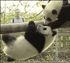 〜おもしろ&かわいい動物動画〜 動物GIFアニメ — http://animalgifanime.tumblr.com/