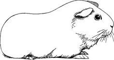 Image result for vintage guinea pig photographs